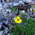 Patagonian Flora Mountain Guides Patagonia