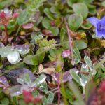 Wildflowers in Mt. Robson Park
