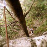 Tree variation Angel's Crest Squamish