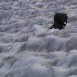 Porcupine Bugaboos