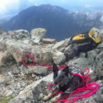 Dog on Summit of Sky Pilot Altus Mountain Guides