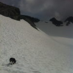 Dog on glacier Sky Pilot