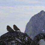 Love Birds 2014 Altus Mountain Guides