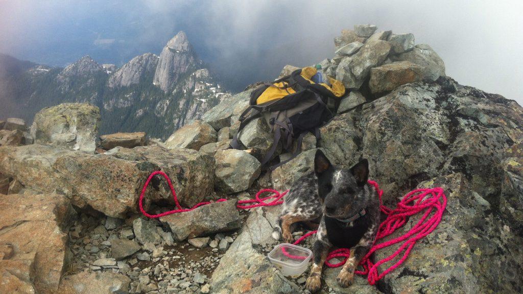 Dog Suzie on Summit of Sky Pilot
